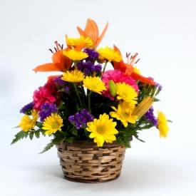 Stein's Flowers